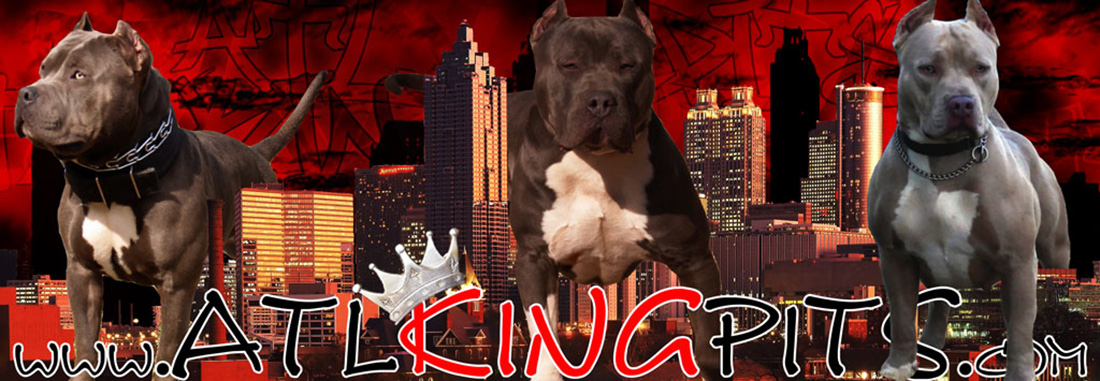 atl-king-pits-blue-pitbull-banner